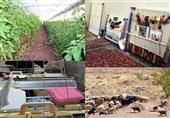 کاهش 12 درصدی تعداد تعاونی های ثبت شده در مرداد امسال