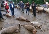 کرمانشاه| آب آلوده به سموم کشاورزی 72 رأس گوسفند را در ماهیدشت تلف کرد