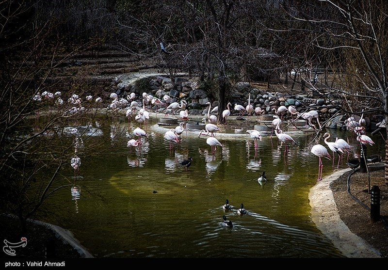 بلاتکلیفی پرونده تخلفات پیمانکار سابق باغ پرندگان پس از گذشت 3 سال!