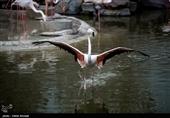 خبر خوش به قمیها؛ باغ پرندگان بهزودی افتتاح میشود+ فیلم