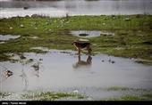 خسارت سیل و بارندگی به بخش کشاورزی کردستان به 680 میلیارد ریال افزایش یافت