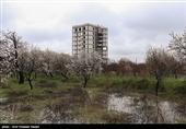 معاون وزیر راه: برای حفظ باغها باید رضایت مالکان هم جلب شود/ 128 هکتار باغ در تهران از دست رفت