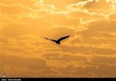 عقاب استپ مصدوم تحویل محیط زیست سیستان و بلوچستان شد