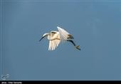 برخورد جدی با کشتار پرندگان در مازندران صورت گرفت
