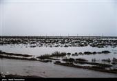 خسارت سیل به بخش کشاورزی به 6700 میلیارد تومان افزایش یافت