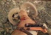 پیشنهاد جدید برای مجازات شکارچیان گونههای نادر