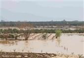 سیلاب به بخش کشاورزی در کشور 13 هزار میلیارد تومان خسارت زد