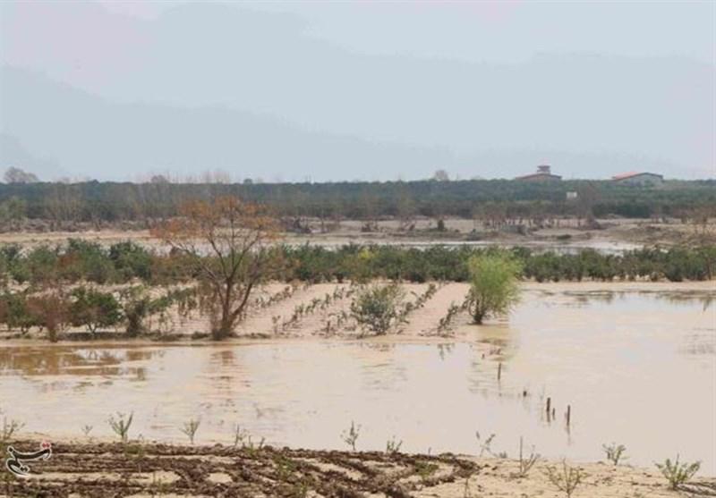 سیلاب به بخش کشاورزی در کشور ۱۳ هزار میلیارد تومان خسارت زد
