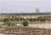 کمیسیون کشاورزی مجلس میزان خسارت سیل به مزارع خوزستان را برآورد میکند