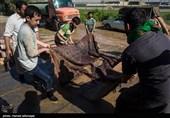 فیلم/ شستوشوی فرش و قالیهای آغشته در گل و لای توسط نیروهای جهادی