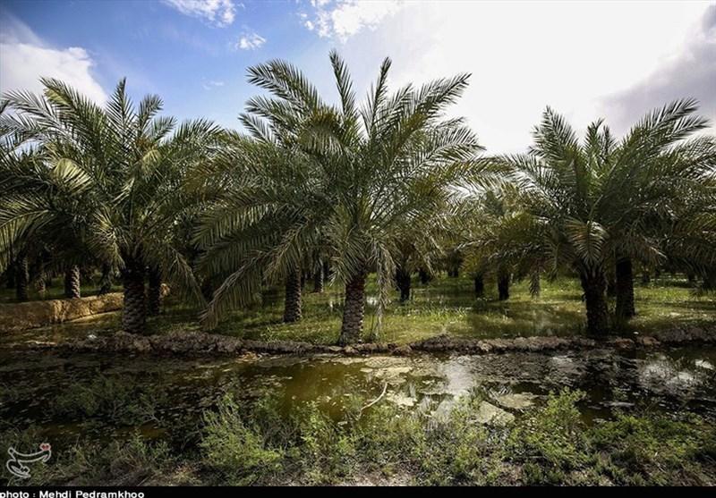 خسارت 13 هزار میلیارد تومانی سیل به بخش کشاورزی