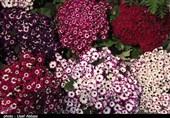 اوضاع اقتصادی فعالان صنعت گل و گیاه در ارومیه + فیلم