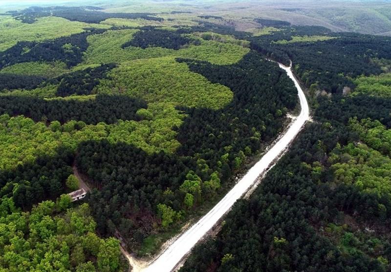 منظره جنگل کرکلارالی در ترکیه + عکس