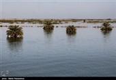 سیل در کلات نادری؛ تخریب خانهها شدید است/برآورد 20 میلیارد خسارت سیلاب