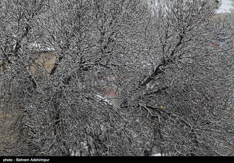 بارش برف بهاری مشکینشهر را سفیدپوش کرد+فیلم