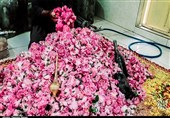 سالانه 15 هزار تن گلاب مرغوب در کاشان تولید میشود