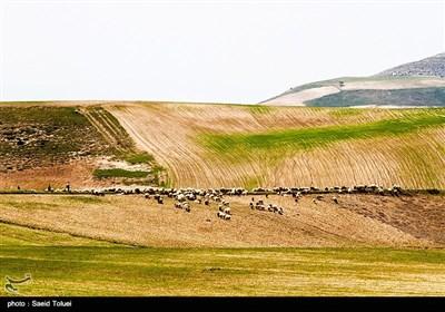 طبیعت بهاری خراسان شمالی