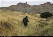 هجوم ملخهای صحرایی به اراضی کشاورزی آبدانان / اوضاع تحت کنترل قرار گرفت
