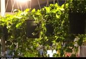 تسهیلات تشویقی به احداث باغ بامها در مشهد اختصاص مییابد