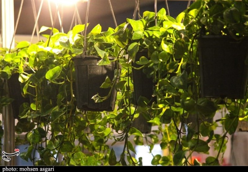 بامها و بالکنهای سبز در فضای شهری مشهد توسعه مییابد