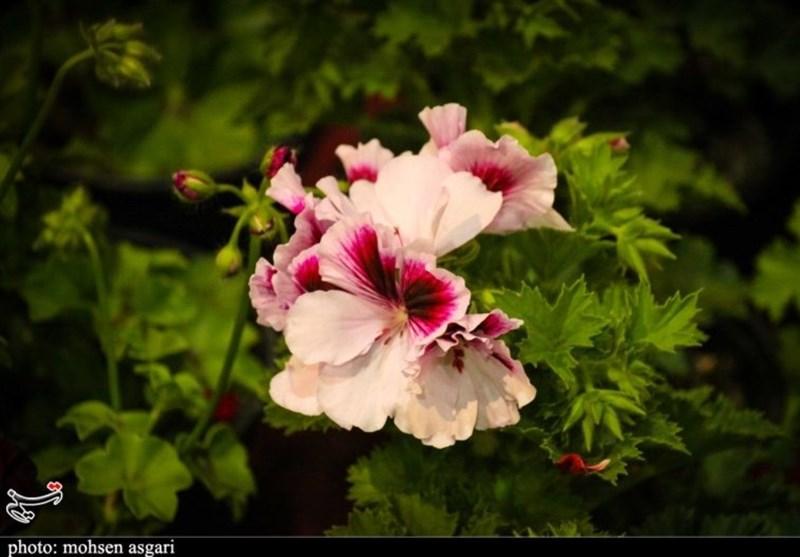 روایت خبرنگار تسنیم از نمایشگاه گل و گیاه در سنندج؛ از حضور پررنگ تولیدکنندگان تا استقبال کم مردم و مسئولان + فیلم