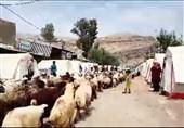 قاچاق احشام در شهرستان ارومیه 49 درصد کاهش یافت