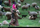 8 درصد عشایر کشور در استان تهران حضور دارند