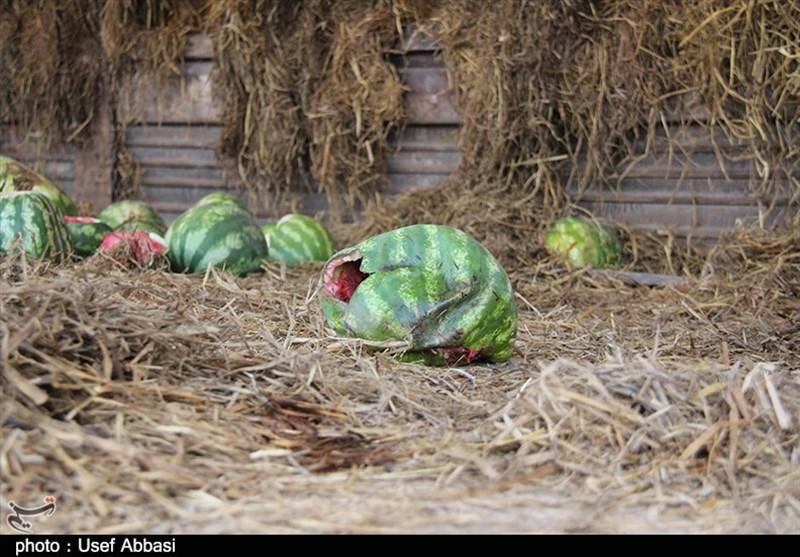 حالوروز نامناسب محصول هندوانه در میدان میوه و ترهبار ارومیه+تصاویر
