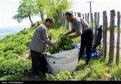 32 میلیارد تومان از مطالبات چایکاران گیلان و مازندران پرداخت شد