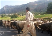 ایلام| ممنوعیت کوچ سنتی به دلیل شیوع کرونا؛ لزوم اتخاذ تدابیر لازم برای معیشت عشایر
