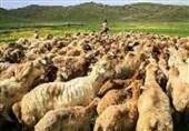 انتشار تصویری مبنی بر قاچاق گوسفند با اتوبوس در فضای مجازی +عکس