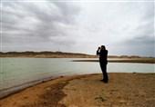 خراسان رضوی  بازگشت «خوتکاهای ابرو سفید» به خانه؛ تالابهای خلیلآباد رونق گرفت