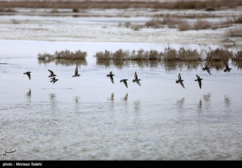 Gavkhuni Wetland: A Well-Known Wetland in Iran