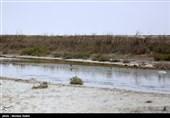 """تأثیرات منفی باز و بسته شدن زایندهرود بر تالاب گاوخونی؛ جنگلهای """"گز"""" از بین رفتند"""