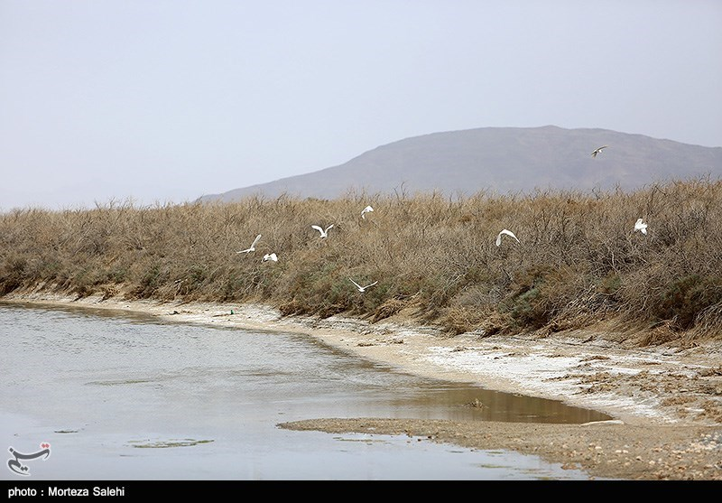 Gavkhuni Wetland: A Well-Known Wetland in Iran - Tourism news