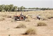 بوشهر| 230 هزار هکتار اراضی استانها علیه آفت ملخ صحرایی سمپاشی شد