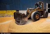 قیمت خرید تضمینی غلات در اردبیل 40 تا 80 درصد افزایش یافت