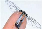 یافتههای جدید محققان از حشرات 6 پا