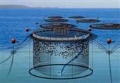 3 پروژه مهم شیلاتی صادرات محور در قشم افتتاح میشود