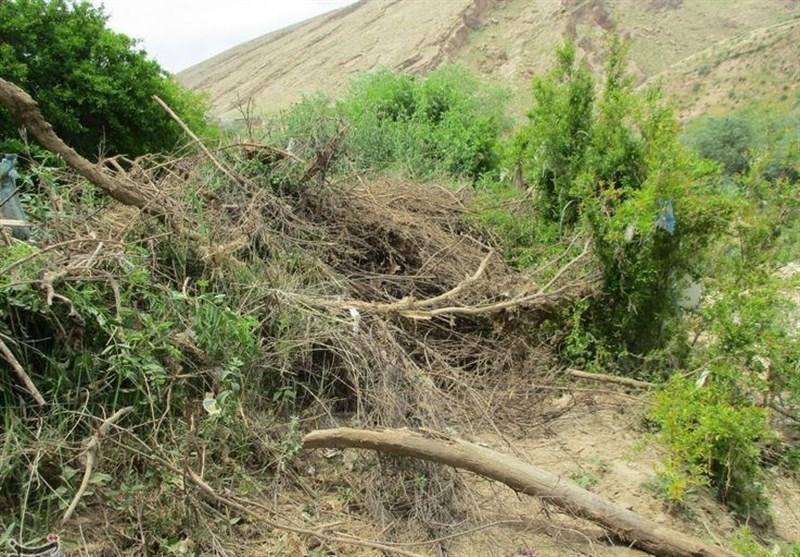 15میلیارد تومان تسهیلات به کشاورزان سیلزده کوهدشت پرداخت میشود