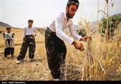 استاندار کردستان : پول گندمکاران دیر پرداخت میشود