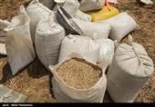 خروج بدون مجوز گندم از استان گلستان قاچاق محسوب میشود