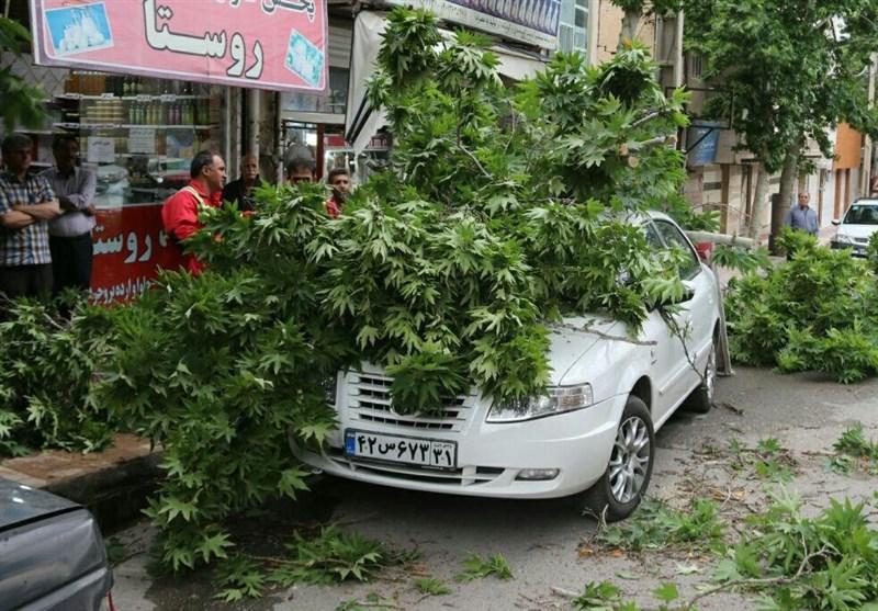 تندباد در خرمآباد سبب شکستن درختان شد؛ سقوط درخت روی 3 خودرو