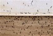 ماجرای حمله کرمهای پروانهای به برخی محلات سنندج و پاسخهای متناقض مسئولان