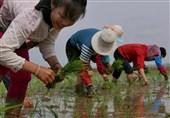 ارسال کمک غذایی سئول برای کره شمالی به امید گرم شدن روابط