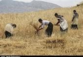 پیشنهاد 2500 تومانی دولت برای خرید تضمینی گندم در سال زراعی آینده
