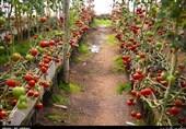 تفاهمنامه ساخت 1024 گلخانه کوچک مقیاس در فارس منعقد شد