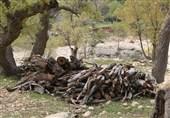 قطع درختان بلوط در منطقه کرکی پلدختر؛ عاملان دستگیر شدند
