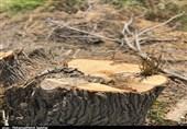 قطع درختان در املاک بالای 500 متر شهری غیرقانونی است