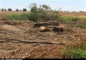 سهم عشایر در نابودی جنگلهای استان کهگیلویه و بویراحمد چقدر است؟